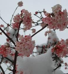 Cserjék bokrok sövények rózsák futónövények