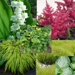 Évelő virágok Sziklakerti és Talajtakaró évelők