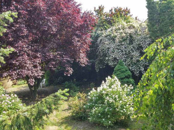 Kerti tanácsok – Kertészkedés, Metszés, Szaporítás