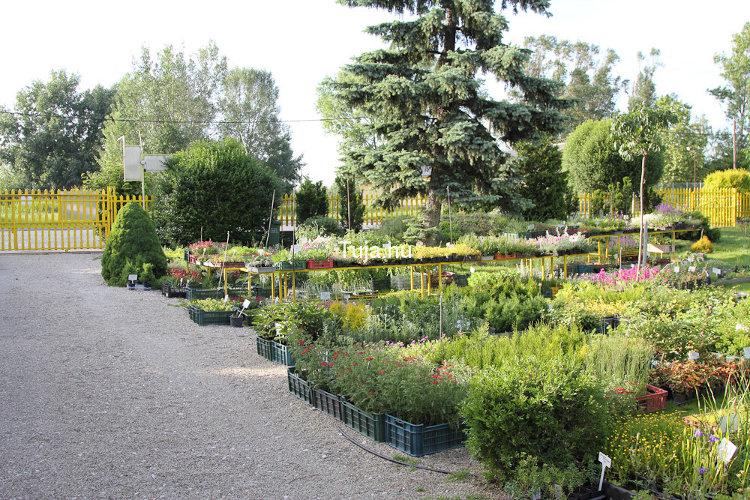 Wiandt Kertészet Lerakat részlet