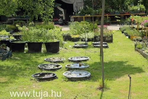 Kertészet Komárom