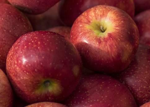 Alma, alma gyümölcsfa