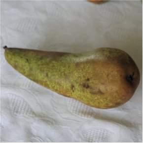 Zöldségek Zöldség termesztés Zöldségfélék