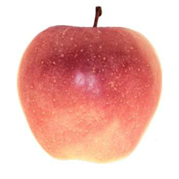alma fajták