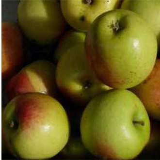 Húsvéti rozmaring Régi magyar almafajta