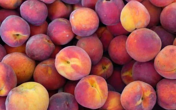 Őszibarack gyümölcsfa, őszibarackfa