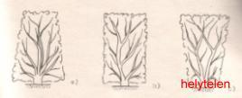 Sövény metszése
