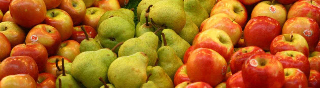 Gyümölcsfa csemete