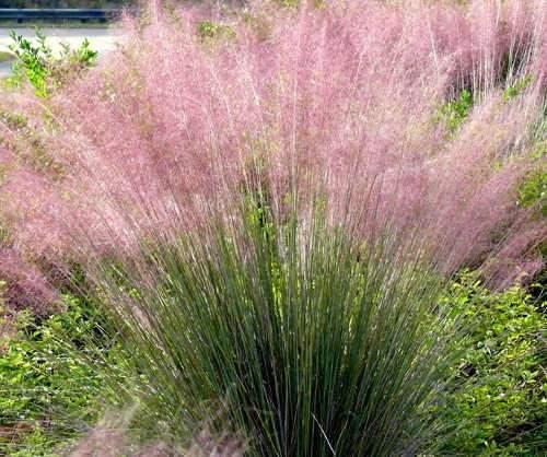 Évelő növények virágok leírások