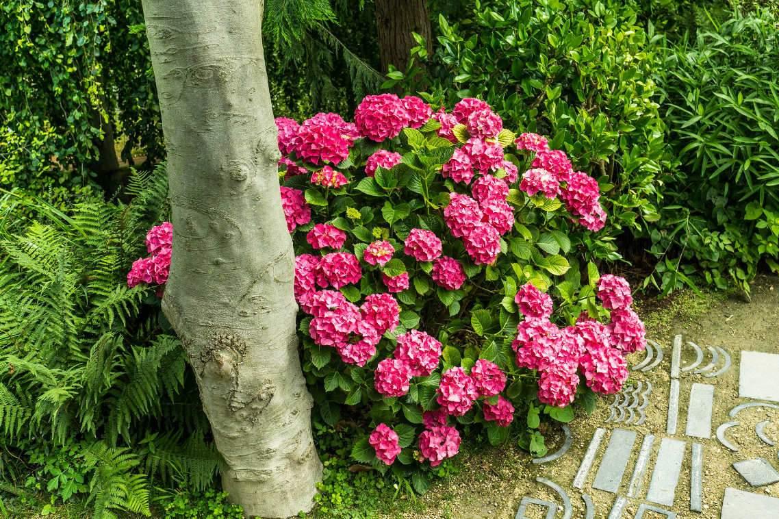 Virágos cserjék Díszcserjék Futónövények