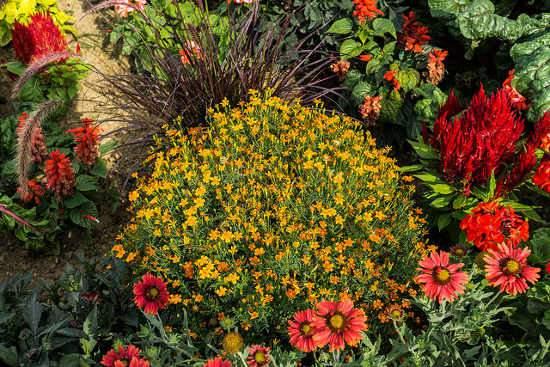Növényismeret kertészkedők számára