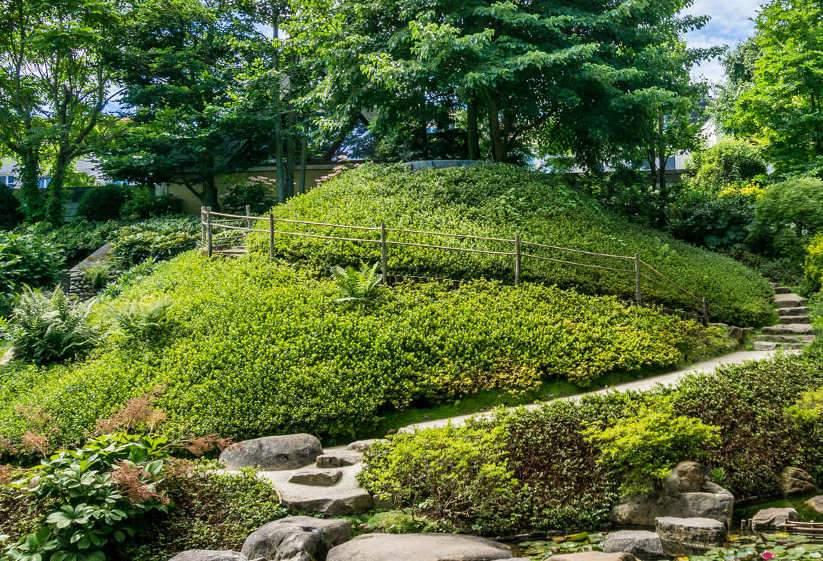 Talajtakaró cserjék, örökzöld talajtakaró növények