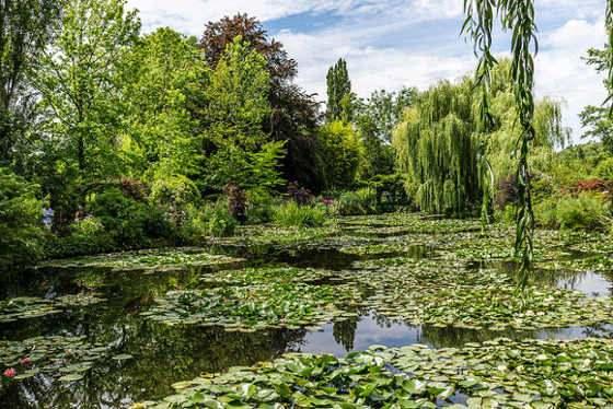 Tavi növények Vízpartra és vízbe ültethető vízinövények