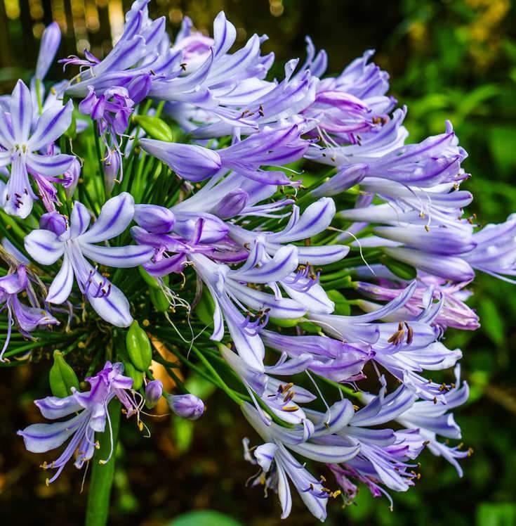 Virágos szobanövények, szobai növények leírásai