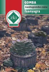 Laskagomba csíra faanyagra, Gombacsíra termesztés