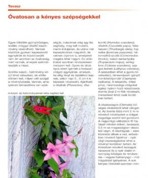 Balkon és dézsás növények titkos élete - olvass bele