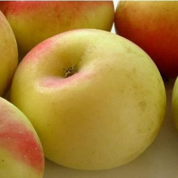 Batul almafa - Történelmi régi alma