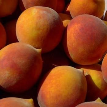 Cresthaven őszibarack gyümölcsfa csemete