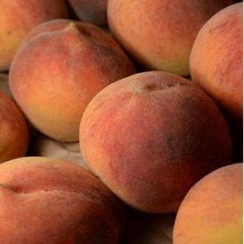 Elberta őszibarack gyümölcsfa