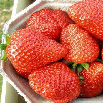 Elianny tálcás szamóca palánta gyümölcs