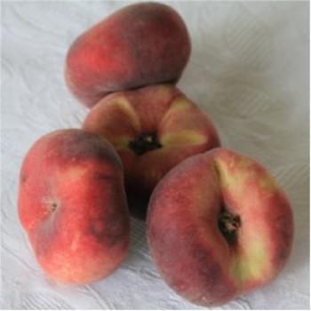 Kínai lapos őszibarack oltvány - Gyümölcsfa