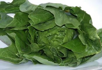 Zöldség vetőmag Római saláta fej