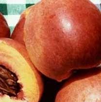 Fantasia nektarin őszibarack gyümölcsfa