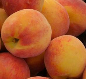 Fayette őszibarack - Gyümölcsfa, őszibarack oltvány