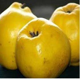 Leskováci birsalma - Birs oltvány - Gyümölcsfa