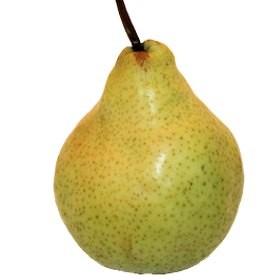 Hardenpont téli vajkörte körte gyümölcsfa